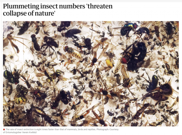 Plummeting Insect Numbers Threaten Collapse of Nature – The Guardian